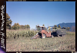 Corn Harvest Near Agassiz