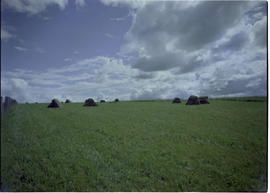 Farm Scene Grassy Plains