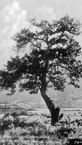 """The only official hangman's tree, Lillooet, BC""."