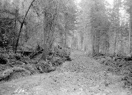 Grade Constructed For Logging Railroad