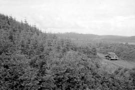 1939 Planting Campbell River