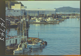 Fish Boats At Wharf, Prince Rupert