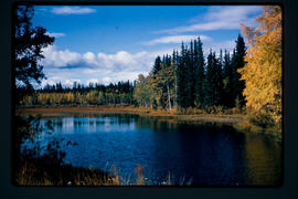 Fall Scene Chilcotin River