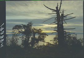 Sunrise Over Hecate Strait, Queen Charlotte Islands