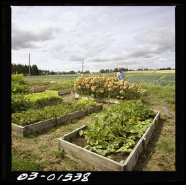 Farm Crops In Saanich