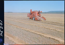Threshing Grain On Farmland Near Dawson Creek