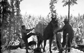 Jack Duncan cinching horse, Quenada Creek.
