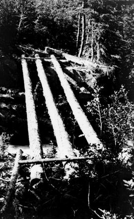 Swannell Survey; the beginning of a log bridge.