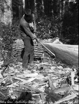 Alexander making a canoe on an exploratory survey of the Finlay River.
