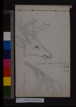 Bucks Head, Settlement Island, Deers Foot.
