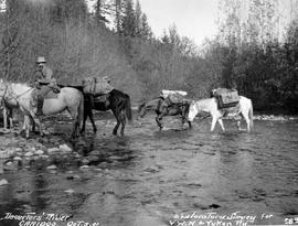 Pack train crossing Deserters River during the exploratory survey for the V.W.N . & Yukon Railway.