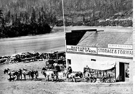 Mule team with freight at Yale.  Starting for the Cariboo mines.