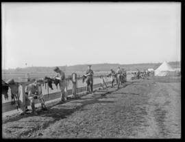 Soldiers at the stables in Willows Camp