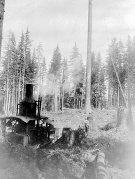 Queen Charlotte Islands Aeroplane Spruce Co. Logging Operation