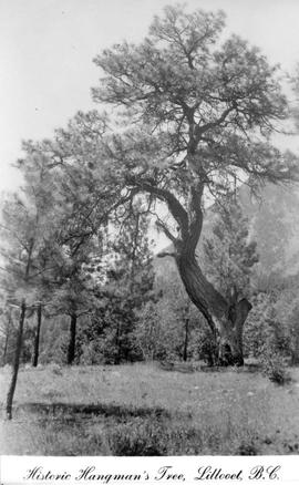 """Historic Hangman's Tree, Lillooet, BC."
